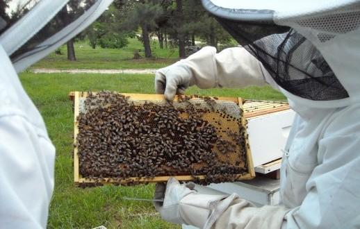 U Zenici nova edukacija za pčelare