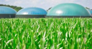 U BiH se gradi nekoliko elektrana na biomasu
