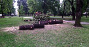 posječena stabla u Gradskom parku (3)