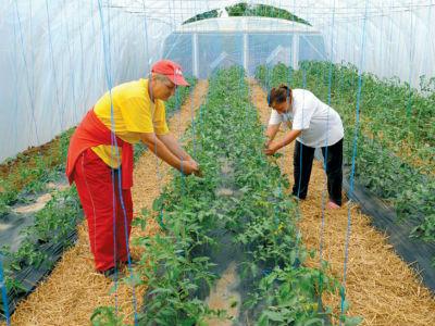 Organska proizvodnja – šansa za domaće povrtlare